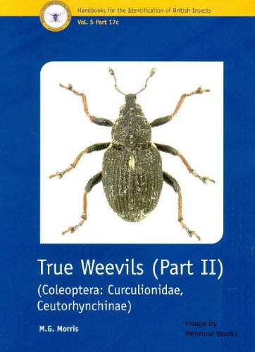 True Weevils: Coleoptera, Curculionidae, Ceutorhynchinae Pt. 2 (Handbooks for the Identification of British Insects)