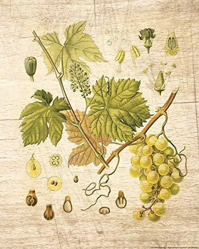 Rahmen-Kunst Keilrahmen-Bild - Nobleworks: Grapevine 3 Leinwandbild Wein-Trauben Reben Küche (80x100)