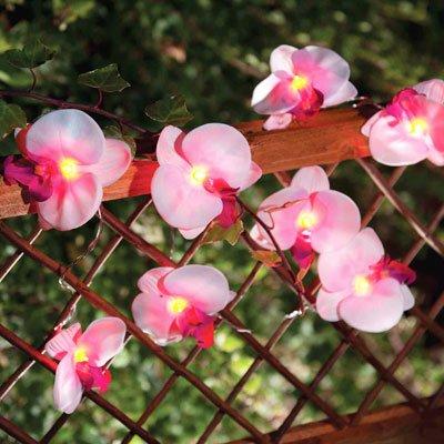 """Solarbetriebene Lichterkette """"Orchidee"""" mit 12 Blüten für Balkon und Garten von Solalux - Lampenhans.de"""