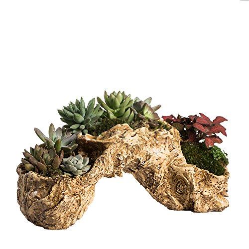 tliche Twisted Treibholz Übertopf Toot Blume Air Halter Skulptur des frischen Pflanzgefäß MULTILAYER 3Töpfe für Dekoration keine Pflanzen (Schloss-requisiten)