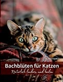 Bachblüten für Katzen: Natürlich lindern und heilen