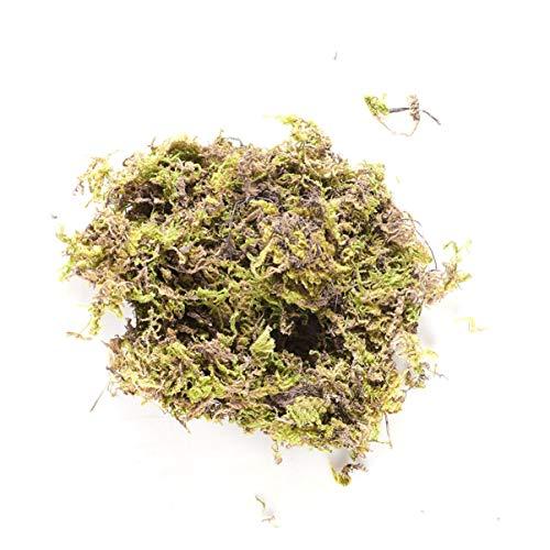 HEALLILY muschio secco verde bosco muschio conservato per piante in vaso terrari giardini fatati arte e artigianato arredamento...