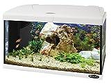 Ferplast 65016011W1 Aquarium Capri 60, Maße: 60 x 31.5 x 39.5 cm, 60 Liter, weiß