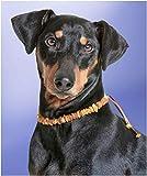 Bernsteinhalsband Hunde Bernsteinkette Zeckenhalsband Flohband gegen Zecken Zeckenschutz Flohschutz Halsband Hund Ungezieferhalsband Bernstein 33-55cm