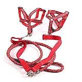 SGXDM Haustier Hundegeschirre Geschirr Eins für Zwei, Zugseil, Zwei Hunde, Brustrücken, Leuchtend, Hund, Haustier, rot, M Reisen,draussen Laufen,Laufen