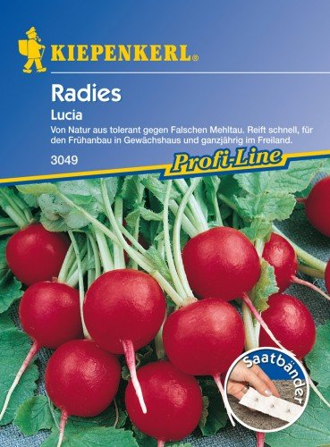 Sperli Gemüsesamen Radieschen Lucia, F1, grün