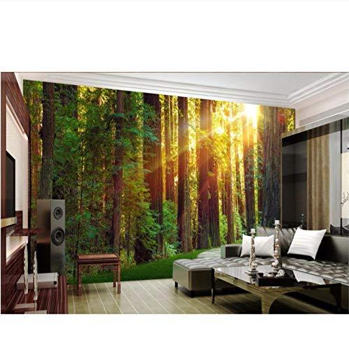 QThxqa personalizado foto 3d papel pintado sol bosque virgen camino habitación decoración pintura cuadro 3d pared murales papel tapiz para pared (Pinturas De Cuadros)