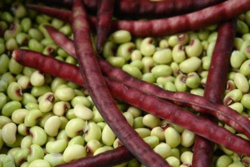 Mississippi Violet Crowder Sud pois dolique Jardin potager - 25 graines