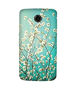 White Flowers-1 Motorola Nexus 6 Case