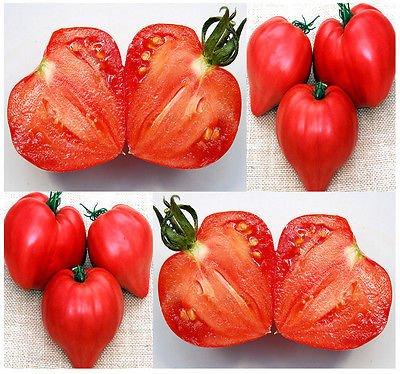 (100) ROSE OX COEUR graines de tomate