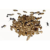 AntHouse 50g Type I Seed Mix for Granivorous Queens Ants and Ants Colony