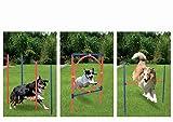Profi Hundetrainigsset Agility 3 Übungen für