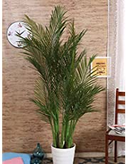 Fourwalls Artificial Areca Palm Plant Without Pot for Home and Office Décor