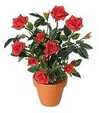 #9: Bee Garden Red Rose Flower Seeds(Pack of 10)