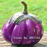 Grande Vente 100graines, Violet Cycle de Aubergine semences de légumes graines de Aubergine