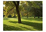 Shaded woodland shady Area Grass & Lawn Seed 800 grams. MeadowMania. Covers up
