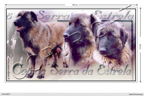autocollant-chien-panoramique-60cm-cao-da-serra-da-estrela