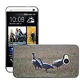 Grand Phone Cases Bild Hart Handy Schwarz Schutz Case Cover Schale Etui//M00141005 Cape Barren Gänse Gänse Tier//HTC One M7