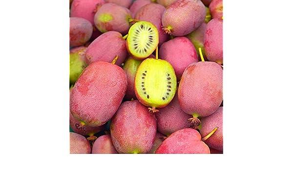 Kiwaï ananas Actinidia arguta /'Bingo/'® * Mini-Kiwi rose