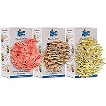 Cultivo de hongos | 3 Kit de setas de ostras rosas, amarillas y grises |