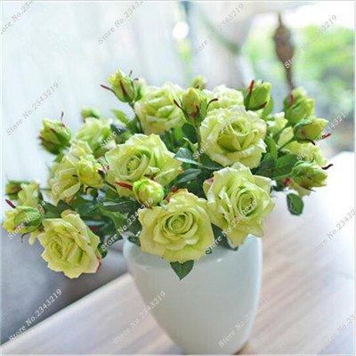 Exotique Miniature Bonsai Fleur Rose Rosas Graine Bricolage jardin et maison embellissant de purification d'air 110 Pcs/Sac 6