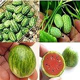 10pc Cucamelon Mini rojo sandía Semillas Planta miniatura de frutas Inicio decoración de jardín