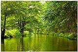 Wallario Poster - Spreewald in Brandenburg grüne Wälder