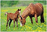 Wallario Poster - Pferde auf der Koppel in Premiumqualität, Größe: 61 x 91,5 cm (Maxiposter)
