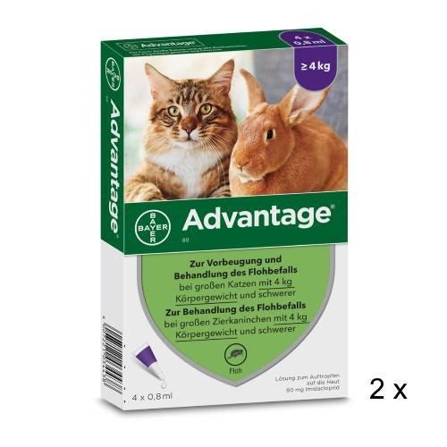 Advantage Spar-Set 2 x (4 x 0,8 ml) Zur Vorbeugung und Behandlung des Flohbefalls bei großen Katzen und Zierkaninchen über 4 kg Körpergewicht