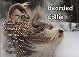 INDIGOS UG - Türschild FunSchild - SE237 DIN A4 ACHTUNG Hund Bearded Collie - für Käfig, Zwinger, Haustier, Tür, Tier, Aquarium - aus hochwertigem Alu-Dibond beschriftet sehr stabil