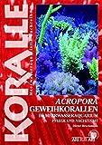 Acropora-Geweihkorallen im Meerwasseraquarium: Pflege und Vermehrung (Art für Art / Meerwasser)