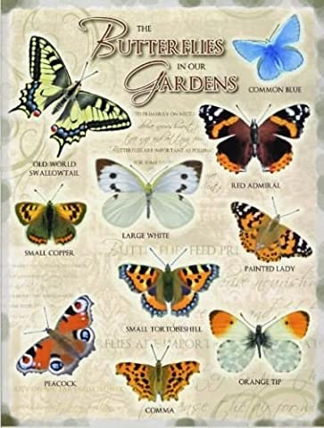 Butterflies in our Gardens including Common Blue, Large White, Red Admiral & Painted Lady. Kitchen, shed, cafe, garden centre, allotment, green house. Large Metal/Steel Wall