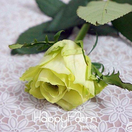 Nouvelles Graines 2015! Chinoise Vert Rose Seeds amant Golden Green Forte Fragrant Garden Rose Flower 150 graines / Pack, # COHT34