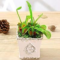 Dionaea Muscipula Giant Clip Venus Flytrap Semillas Semilla insectívora Home Garden Plant Semillas Bonsai Semillas en maceta
