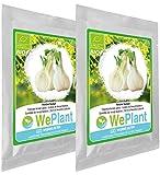 BIO Fenouil bulbeux - Graines de plantes aromatiques/Intérieur & Extérieur