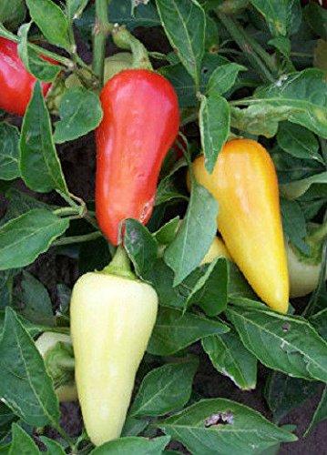 Portal Cool 300 Hot Pepper Samen Santa Fe Grande Chili Pepper Samen
