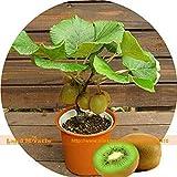 3 categoría atrapamoscas de Bonsai Semilla Planta de tiesto Muscipula Dionaea Semilla terraza jardín de la planta carnívora 1 Paquete 120 unidades
