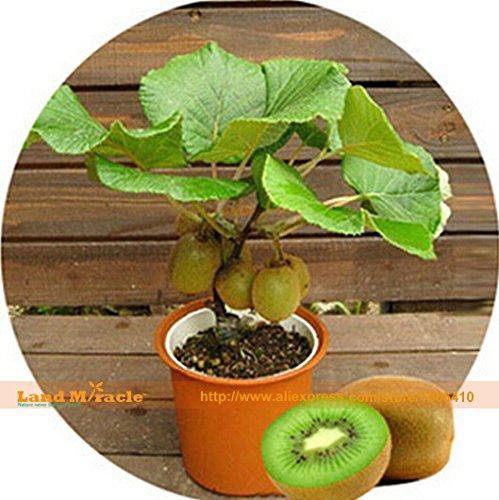 3 catégorie Flytrap Graine Bonsai pot Dionaea Plant Seed Terrasse Jardin Plante carnivore 1 Emballage 120 Pieces