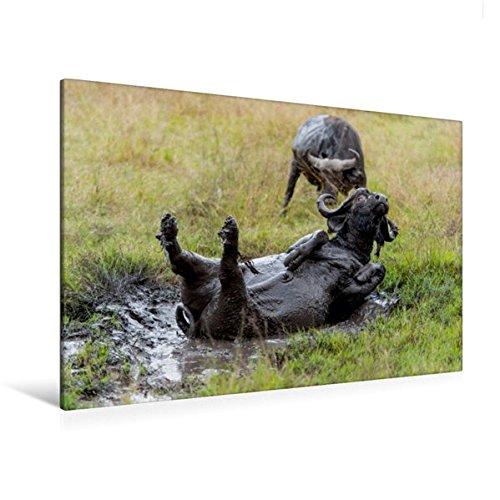 Preisvergleich Produktbild Premium Textil-Leinwand 120 cm x 80 cm quer, Oktober: So eine Fangopackung bringt echtes Wohlbefinden. | Wandbild, Bild auf Keilrahmen, Fertigbild auf echter Leinwand, Leinwanddruck (CALVENDO Tiere)
