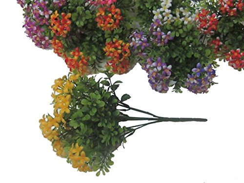 busch-fiori-darancio-color