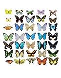 Fenstersticker No.51 Schmetterlinge Set II Tiere Schmetterlinge Fliegen Fenstersticker Fensterfolie Fenstertattoo Fensterbild Fenster-Deko Fensteraufkleber Fensterdekoration Glas-Sticker Größe: 30cm x 30cm