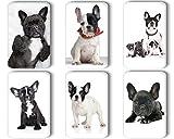 Merchandise for Fans Französische Bulldogge - 6 rechteckige Kühlschrankmagnete 7 x 4,5 cm - 09 für Memoboard Pinnwand Magnettafel Whiteboard