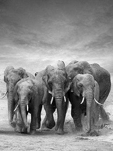 VLIESFOTOTAPETE VEA Fototapete Tapete Wandbild Vlies | Welt-der-Träume| Elefanten | VEA (206cm. x 275cm.) | Photo Wallpaper Mural 11578VEA-AW | Tier Tiere Elefant Afrika Natur Wasser Herde -