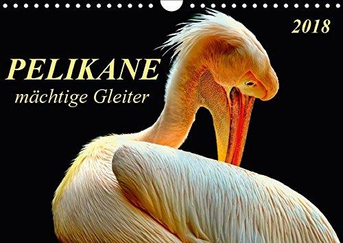 Pelikane - mächtige Gleiter (Wandkalender 2018 DIN A4 quer): Pelikane - tollpatschige Läufer und elegante Gleiter. (Monatskalender, 14 Seiten ) (CALVENDO Tiere) (Läufer-welt Kalender)