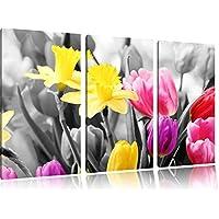 belle narcisi con tulipani neri / bianchi su 120x80 immagine su tela 3 pezzi tela di canapa, grande XXL Immagini completamente Pagina con la barella, stampa d'arte su murale con la struttura, gänstiger come la pittura o pittura ad olio, nessun manifesto o poster - Bella Narciso
