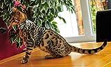 Mynwood Cat Jacket Geschirr für ausgewachsene Katzen