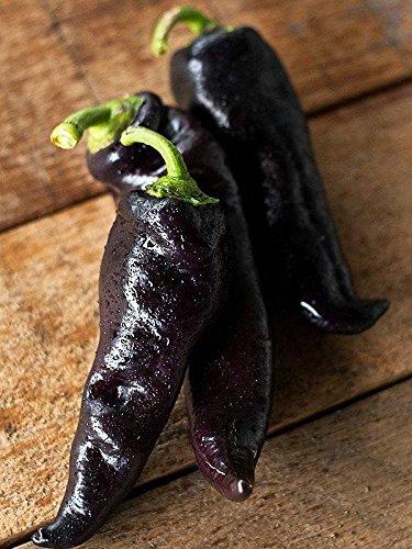 ScoutSeed 20 Paprika Samen GYPSY BARON Russisches Erbstück Gemüse Schwarz & Selten