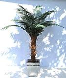 FRÜHBUCHER-RABATT: Exklusive PHÖNIX Outdoorpalme ca. 190/200 cm, wetterfeste Kunstpalme für den geschützten Aussenbereich