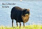 Das Leben der Schafe (Wandkalender 2016 DIN A4 quer): Nutztiere (Monatskalender, 14 Seiten) (CALVENDO Tiere)
