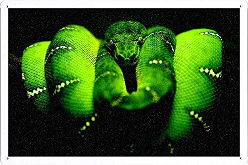 Metall Poster Platte Wand-Dekor Blechschild von Midnight Green Tree Python 20*30cm (Green Python-pet Tree)